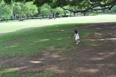 ハワイ2009.12この木何の木②yun