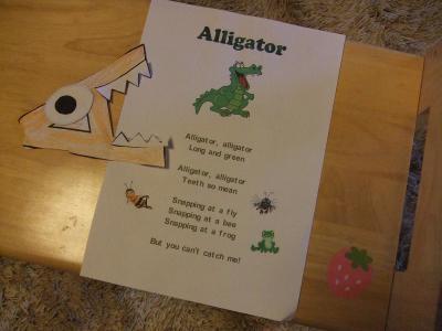 2011.9C先生Alligator