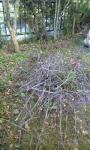 枝がわっさわさ! お庭の大掃除!