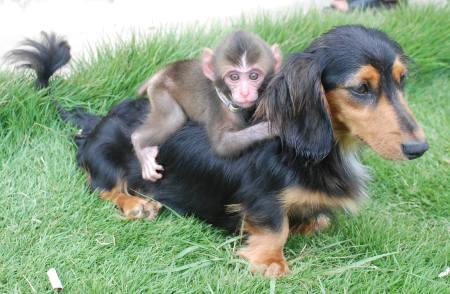 子猿育て1