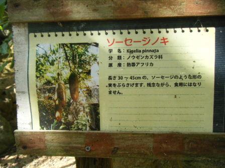 ソーセージの木2
