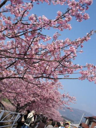 2010.2.24川津さくら12