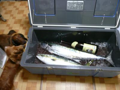 P1040409魚
