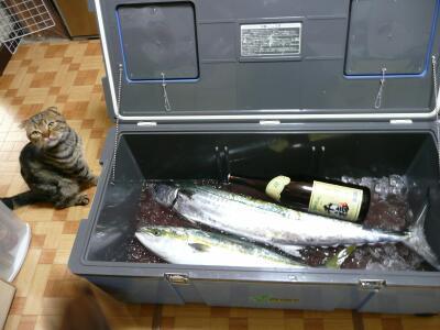 P1040410魚
