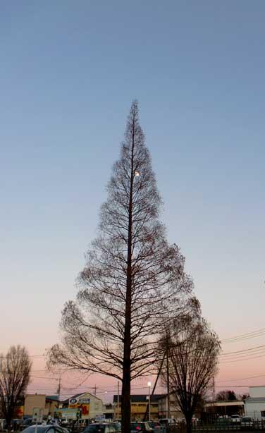 クリスマスツリーのような