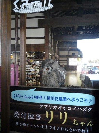 掛川花鳥園&蓬莱橋 (10)