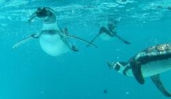 20090819王子動物園ペンギン1
