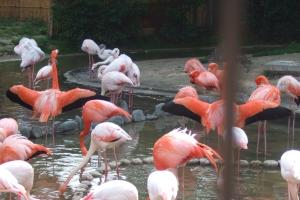 20100503王子動物園5