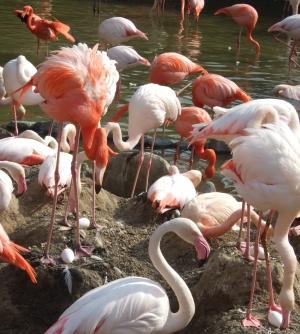 20100503王子動物園3