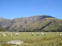 NZ20024_thumb[1]