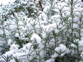新潟市、積雪