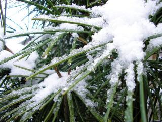 新潟市の積雪_2