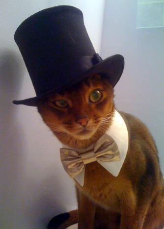 cat_toki_model2.jpg