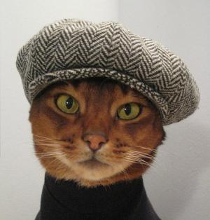 cat_toki_model.jpg