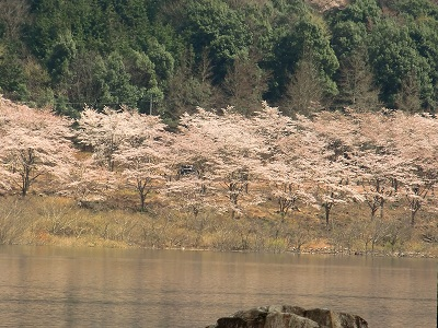 20100405土師ダム2