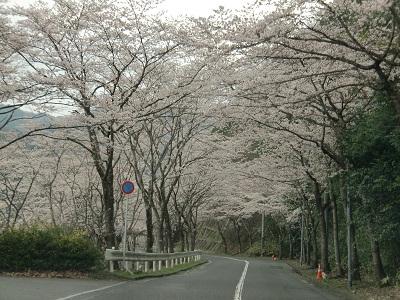 20100405土師ダム6