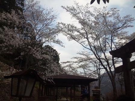 20110411羅漢ツー8