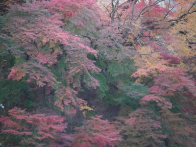 水沼温泉の紅葉