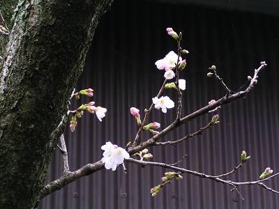 春の訪れ・・・