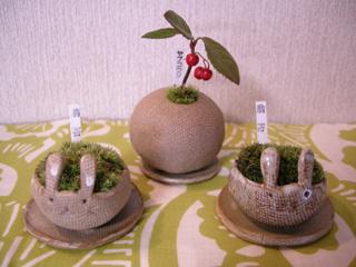 1,ミニ盆栽
