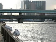 11.隅田川テラス