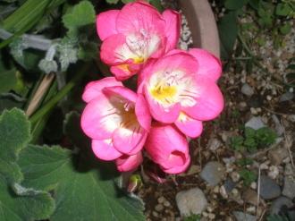バラの花&刺しゅう