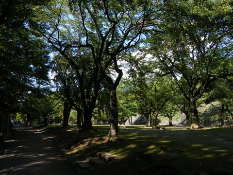 20080914_kaikoen-25.jpg