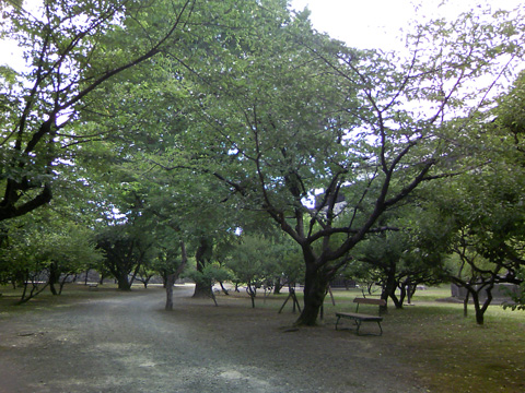 20090620_kumamoto_castle-39.jpg