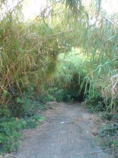 トトロの抜け道