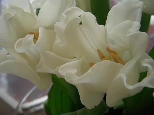 幸せの白い花