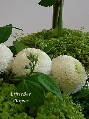 Little Bee haitatu dayori ::。。。☆。。。::・・・・::☆::。。。