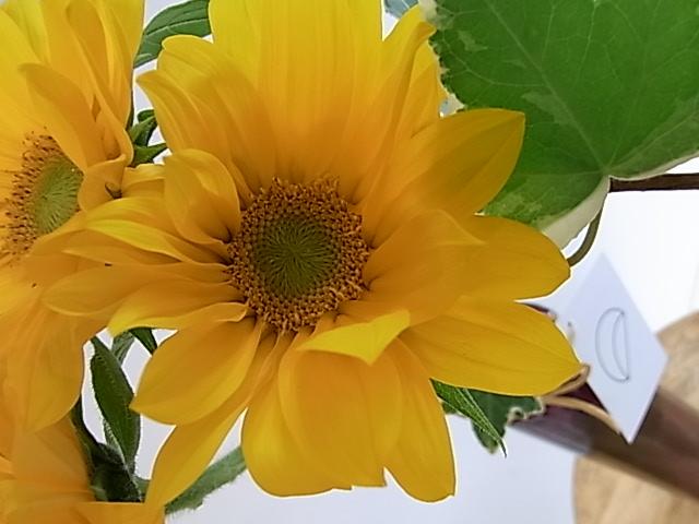 紫陽花の水揚げ・ドライフラワーにするには・・・
