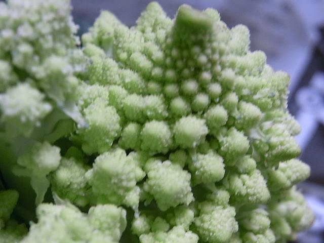 花のような野菜♪