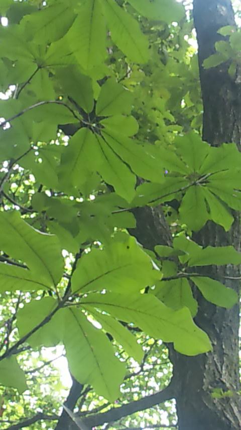 木から差し込む光