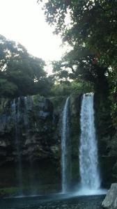 渓谷に流れ落ちる済州島最大の滝