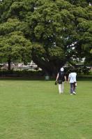 2011_hawaii_1_2.jpg