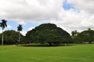 2011_hawaii_1_9.jpg