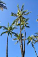 2011_hawaii_2_14.jpg