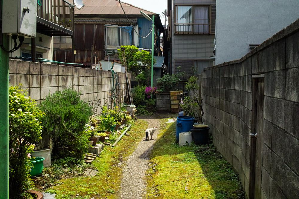 06arakawa4-10.jpg