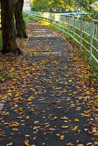 日常写真秋-3