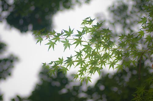 東山植物園秋-11