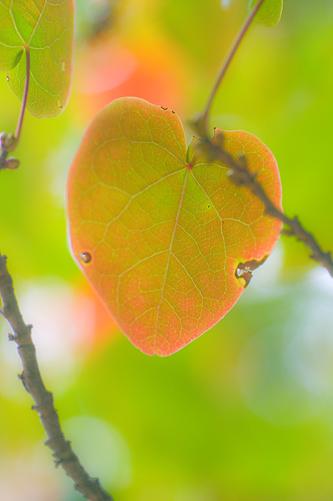 東山植物園秋-12
