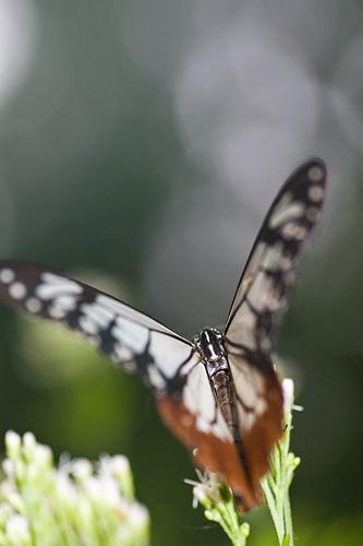 東山植物園秋-4