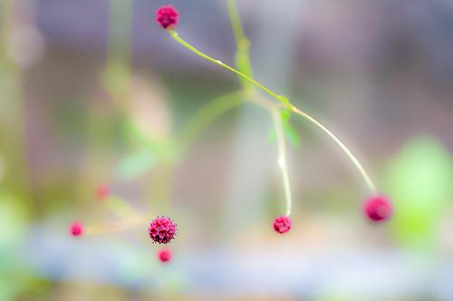 東山植物園秋-5