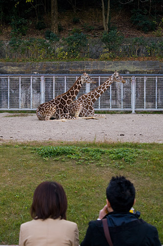 東山動植物園-5