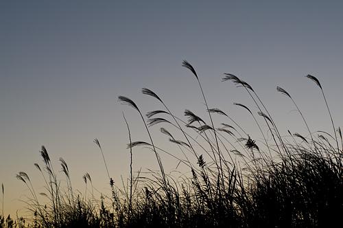 日々の風景-18
