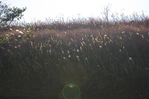 日々の風景-8
