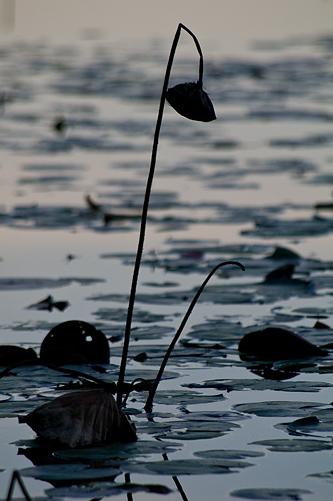 牧野ヶ池-9