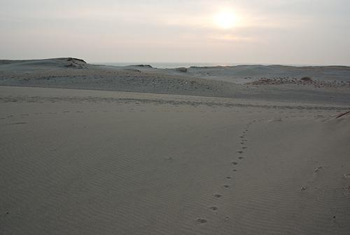中田島砂丘足跡