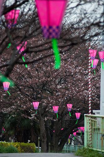 雨桜1-10